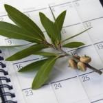 Lave planer i en kalender